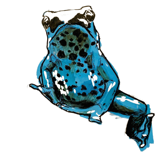 Dendrobates drawing by Justin Dangerson