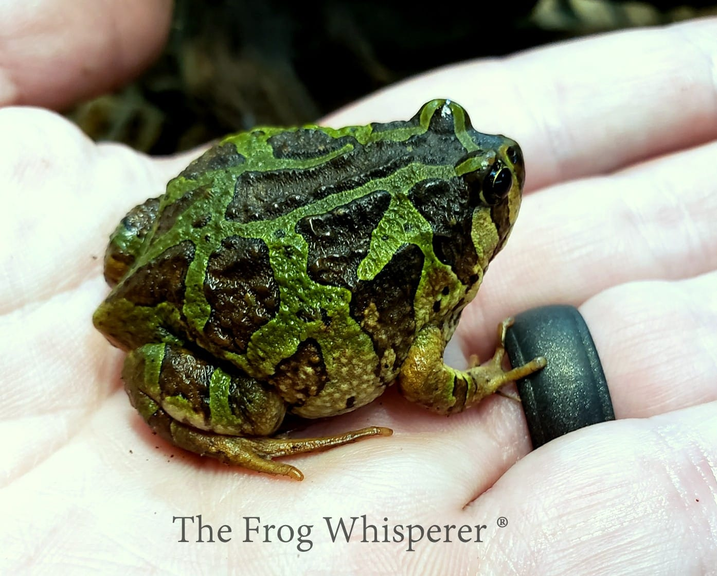 mossy frog on hand