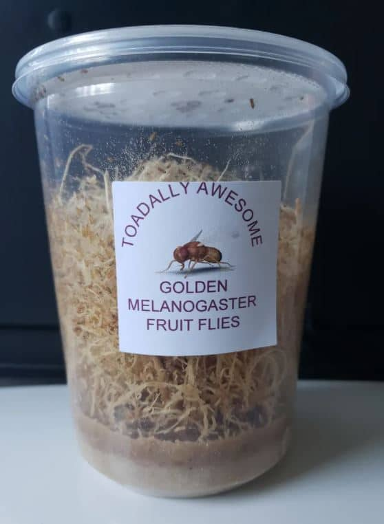 Toadally awesome melanogaster fruit fly culture