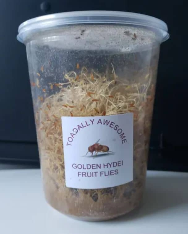 Toadally awesome golden hydei culture